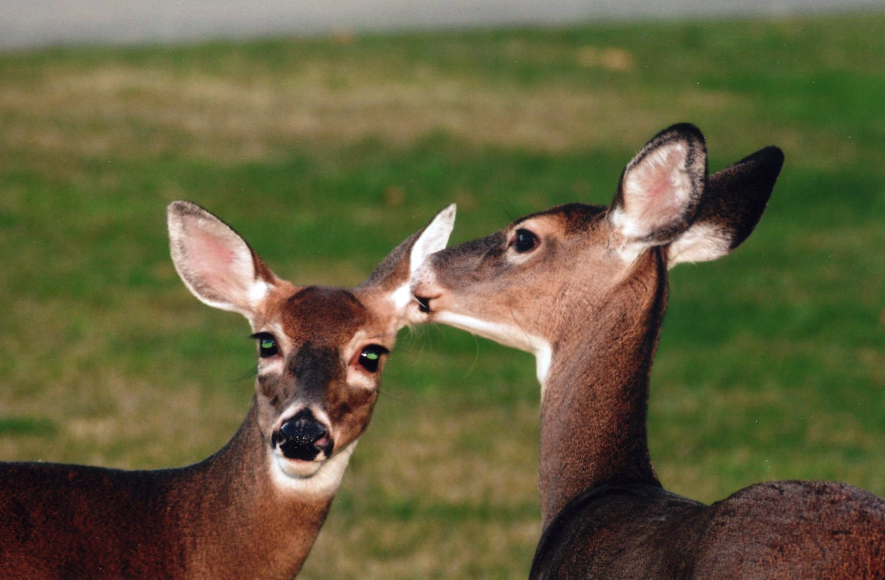 refer a friend deers